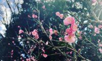 ✨春爛漫✨